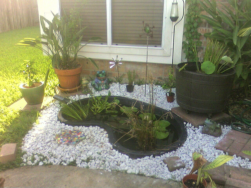 Garden Pond Set-Up. cybertoad. picture is a little foggy - took this in...